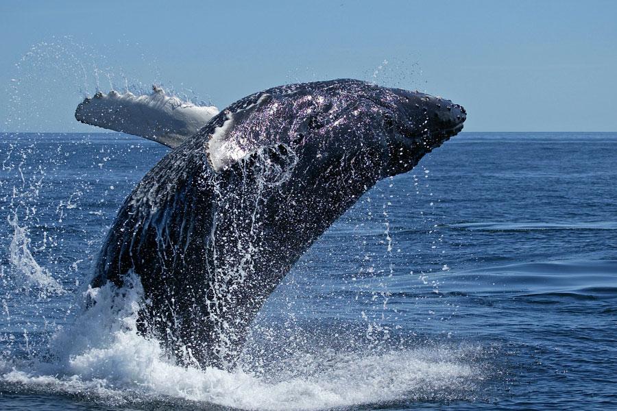 baleine1.jpg