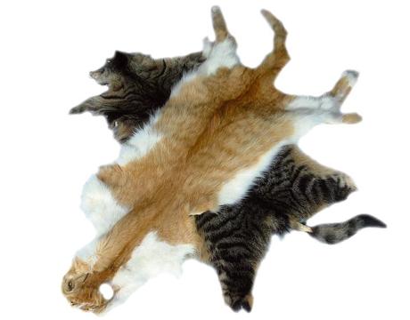 la chine continue importer de la fourrure de chats et de chiens veggie en folie veggy up. Black Bedroom Furniture Sets. Home Design Ideas