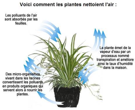 schema_comment_les_plantes_depolluent701