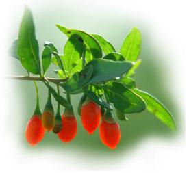 berries_goji_jus